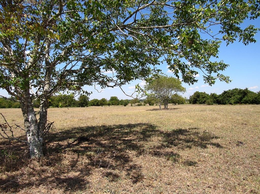 Tract 1 Nixon Lake Road Property Photo 1